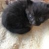 もうすぐ1ヶ月※ビビリで甘えん坊な黒猫ちゃん