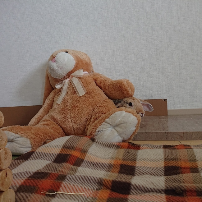 nenenomamaのカバー写真
