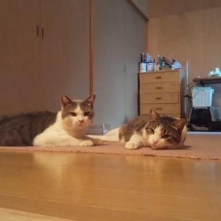 仲良し兄弟 ジョマとマカオ