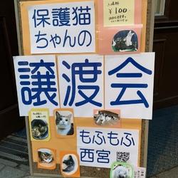 もふもふ西宮 保護ネコの幸せ譲渡会 サムネイル2