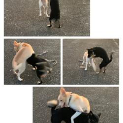 「大事(犬)件」サムネイル2
