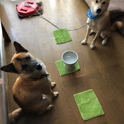 「倉敷っ子、野犬の室内飼育について」サムネイル2