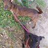 ぴとっと甘える10kg琉球犬MIX女子タピオカ サムネイル2