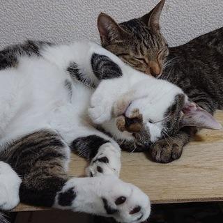 猫の宝塚歌劇団 りお様と明日海