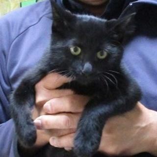 黒猫2兄弟♂