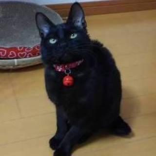 心♡真っ黒でカギ尻尾 幸運の黒猫です