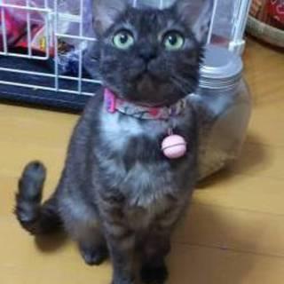 絆♡美猫 ブラックスモークの人懐こい女の子