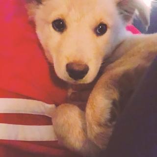 生後3か月仔犬 女の子
