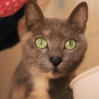 にゃおん♡グリーンの瞳がきれいなパステルサビ