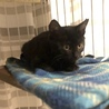 黒猫キキ♡可愛い女の子3か月 サムネイル2