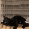 黒猫キキ♡可愛い女の子3か月 サムネイル3