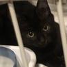 黒猫キキ♡可愛い女の子3か月 サムネイル4