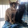 黒猫キキ♡可愛い女の子3か月 サムネイル5