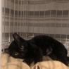 黒猫キキ♡可愛い女の子3か月 サムネイル6