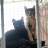黒猫キキ♡可愛い女の子3か月 サムネイル7
