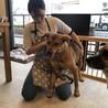 8歳大型犬「リキ」 サムネイル4