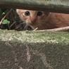 猫を嫌がる住人が殆どのアパートの敷地で産まれた子 サムネイル2