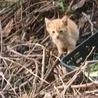 猫を嫌がる住人が殆どのアパートの敷地で産まれた子 サムネイル3