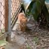 猫を嫌がる住人が殆どのアパートの敷地で産まれた子 サムネイル4