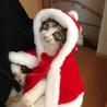 【トライアル決定】美猫のエリちゃん。