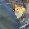 天使のようなキジ猫兄弟 サムネイル2
