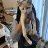 天使のようなキジ猫兄弟 サムネイル3