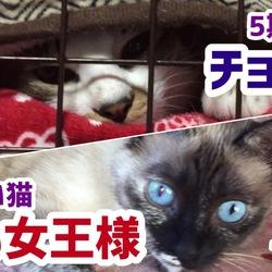 我が家の強猫2トップ!!