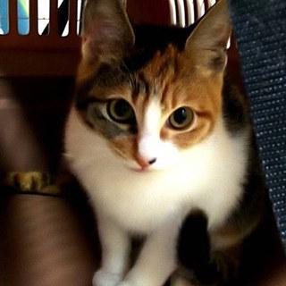 美三毛猫のちゅらちゃん