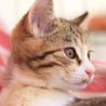 抱っこでゴロゴロが止まらない♡美形の三毛猫ピリカ サムネイル5