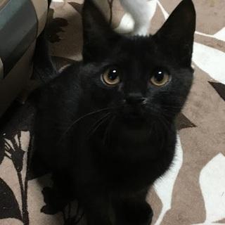 ☆まんまるお目目の可愛い黒猫女子KIRIちゃん☆