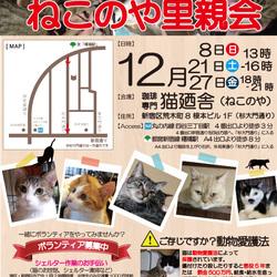 12月8日(日) 四谷猫廼舎 里親会(ボランティア募集中)