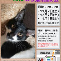 猫の譲渡会and野良猫相談会 サムネイル1
