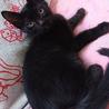 ヤンチャボーイ黒猫ユウくん