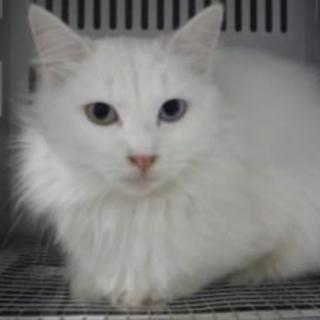 里親様を待っています。成猫 白黒 294