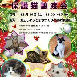 稲毛駅近くで保護猫譲渡会 開催です!