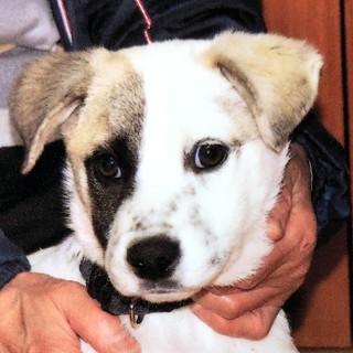 生後3か月仔犬 男の子