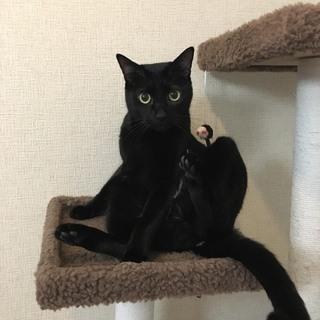黒猫のくろちゃん 人懐こい五歳です。
