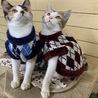 生後4ヶ月の三毛ちゃん姉妹猫♡とても人懐こい♡