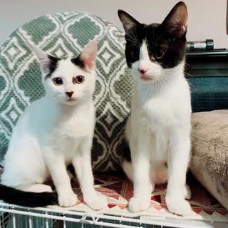 天使のように可愛い子猫兄妹です