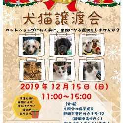 静岡市葵区で開催! 犬猫譲渡会