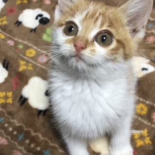人懐っこい元気いっぱい子猫ちゃん!