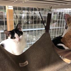 「窓ぎわ猫。」サムネイル2