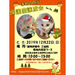 土岐市動物供養寺三仙院 保護猫譲渡会