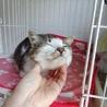 ぽっちゃり猫さんになりました☆ サムネイル2