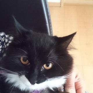 黒猫半長毛手袋ソックス