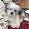 とても甘えん坊の、可愛い赤ちゃん犬です