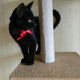 スリスリゴロゴロの黒猫ちゃんと暮らしたい方❤︎
