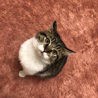 とっても可愛い子猫です。