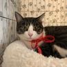 家猫修行中のエコちゃん。マイペースです。
