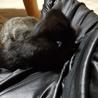 約生後4カ月黒猫仔猫(メス)の里親募集します。